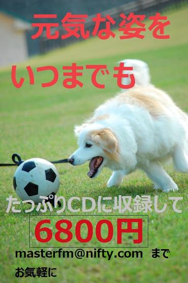 Dm0505aa